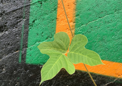 Leaf Graffiti