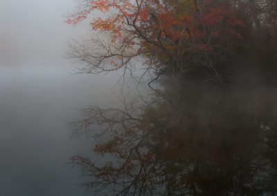 Reflection in Fog