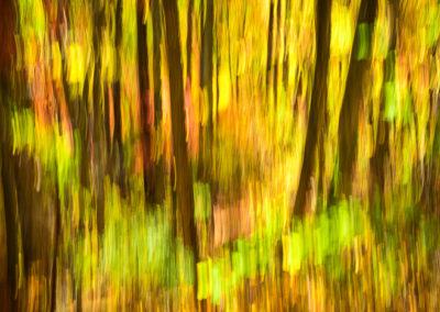 Fall Color Streaks